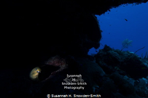 Wide Angle Snoot - Photograph #2: Second in a series of i... by Susannah H. Snowden-Smith