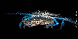 Crab by Tamer Fouad