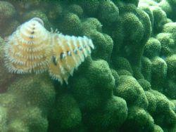 taken while diving on molasis reef in key largo by Kara Wall