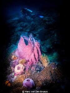 divercolors by Marc Van Den Broeck