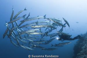 Scoglio del Medico, Ustica Island by Susanna Randazzo