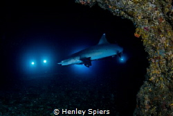 How to Surprise a Shark by Henley Spiers