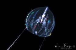 Underwater flying saucer by Mario Robillard