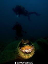 Octopus vulgaris Inside & Outside by Cumhur Gedikoglu