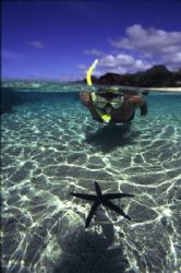 Snorkeller in the shallows of a coral lagoon inspects a L... by Richard Smith