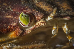 Closer view of a Crab's eye by Mario Robillard