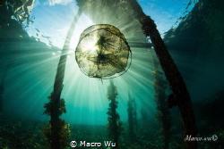 Water is the sky by Macro Wu