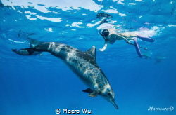 The dolphin and the dream girl communicate! by Macro Wu
