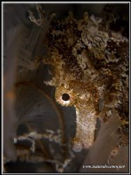 This sea horse was trying to hide behind these feathery h... by Yves Antoniazzo