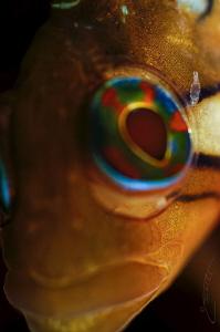 ~ Itchy Eye ~ by Geo Cloete