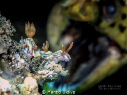 MONSTER