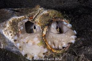 The octopus in the iron mask. by Mehmet Salih Bilal