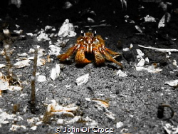 Hermit crab in Puget Sound by John Di Croce