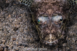 Lying in ambush (Cymbacephalus beauforti) by Michal Stros