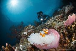 Z U L  Trawangan Slope Lombok (Gili), Indonesia. by Irwin Ang