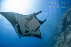 Mantaray and Sun, Socorro Island México by Alejandro Topete