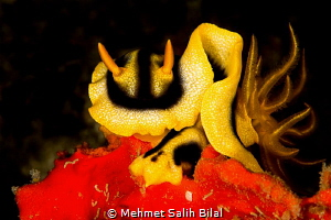 Looks like we have eye contact. by Mehmet Salih Bilal