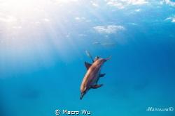 Playful dolphin by Macro Wu