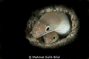 Aren't they cute?