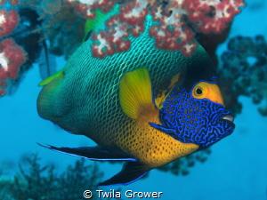 Blue by Twila Grower