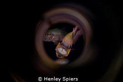 Cardinal Shuffle by Henley Spiers