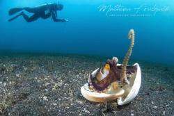 coconut octopus by Mathieu Foulquié