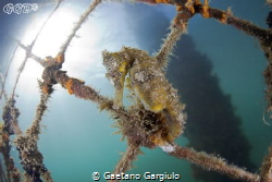 the queen of the net... by Gaetano Gargiulo