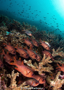 Soldierfish, Tatawa Besar, Komodo NP by Tobias Reitmayr