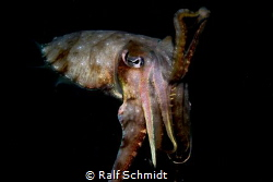 Nightdive and close contact to a nightswimmer... by Ralf Schmidt