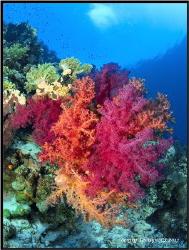 Coral garden. by Sergey Lisitsyn