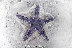 starfish sinking in sand by Gaetano Gargiulo