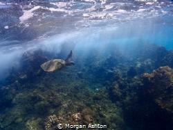 Turtle Town by Morgan Ashton