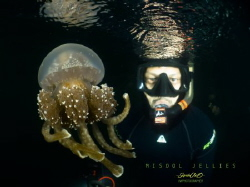 Having thousand of non stinging Jellyfish was an amazing ... by Ipah Uid