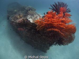 Artificial reef of Pemuteran (Biorock project) by Michal Stros