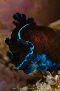 Black Nudibranch by Kate Jonker