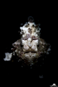 Frogfish portrait with snooted light by Raffaele Livornese