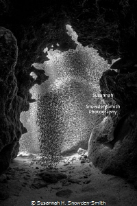 """""""Swarm"""" Silversides look like a swarm of bees as they ra... by Susannah H. Snowden-Smith"""