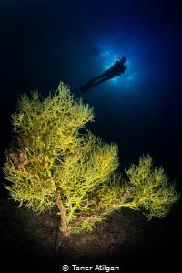Yellow tree by Taner Atilgan