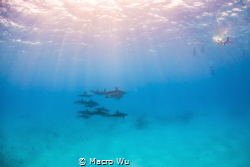 Enjoy the sunshine and the gift of the ocean! by Macro Wu