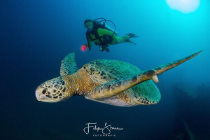 Turtle at the Fang Ming wreck, La Paz, Mexico. by Filip Staes