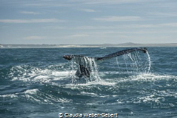 fluke...