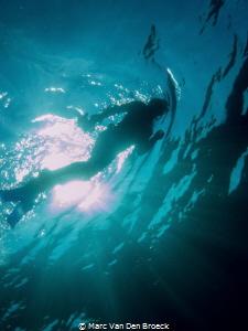 snorkelinthesun by Marc Van Den Broeck