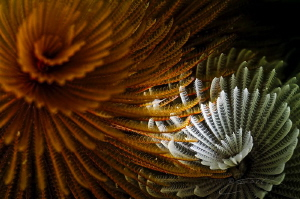 ~ Swirl ~ by Geo Cloete