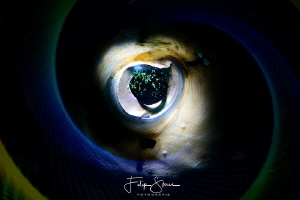 """The eye"", double exposure inside the camera, La Paz, Mex... by Filip Staes"