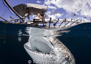 The remarkable relationship between the fishermen and wha... by Tracey Jennings