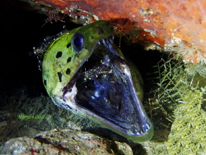 Please help it itches so bad.  Moray with several cleaner... by Marylin Batt