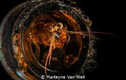 Shrimp in bottle - different crop by Marteyne Van Well