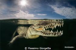 inside a Mangrove lived american crocodile by Massimo Giorgetta