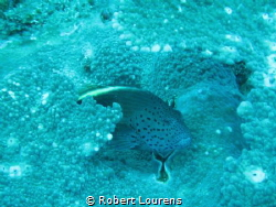 This is a fish watching me. He posed very shyly for the pic by Robert Lourens