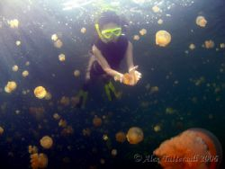 Snorkling in jellyfish Lake in Palau... millions and mill... by Alex Tattersall